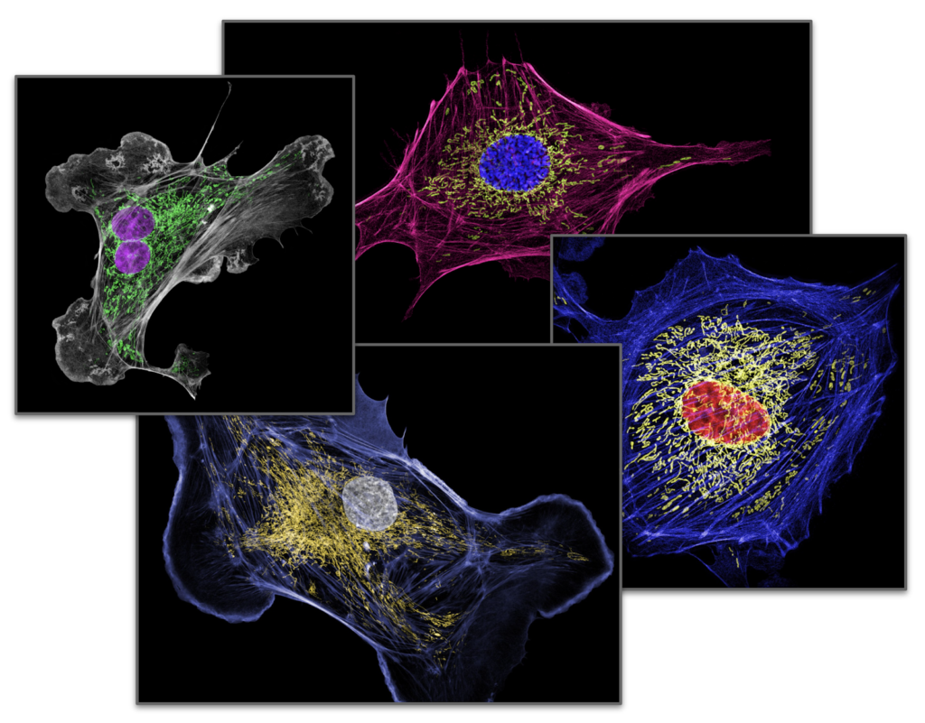 High resolution images of four cells